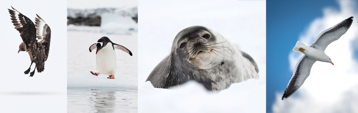 Antarctica_WhalersBay