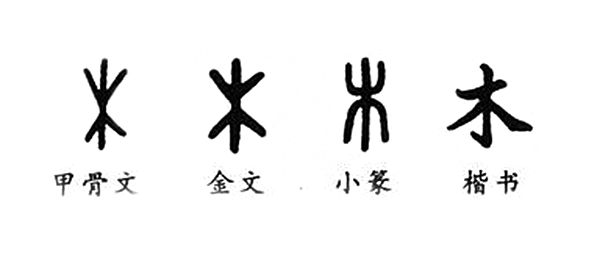 "The different looks of the character ""木"" in the history"