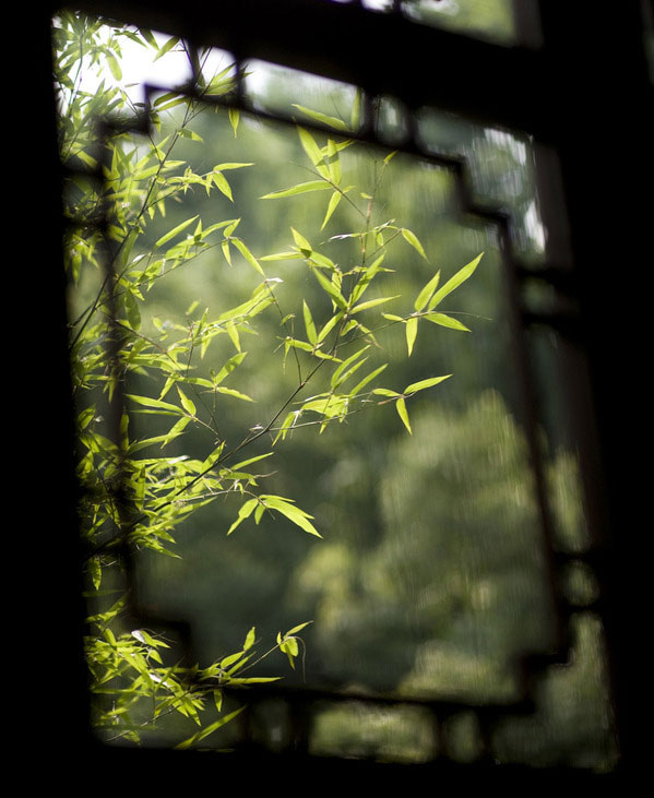 Window in Asian Architecture-Green leaves budding through window