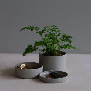 table-plant_Entry