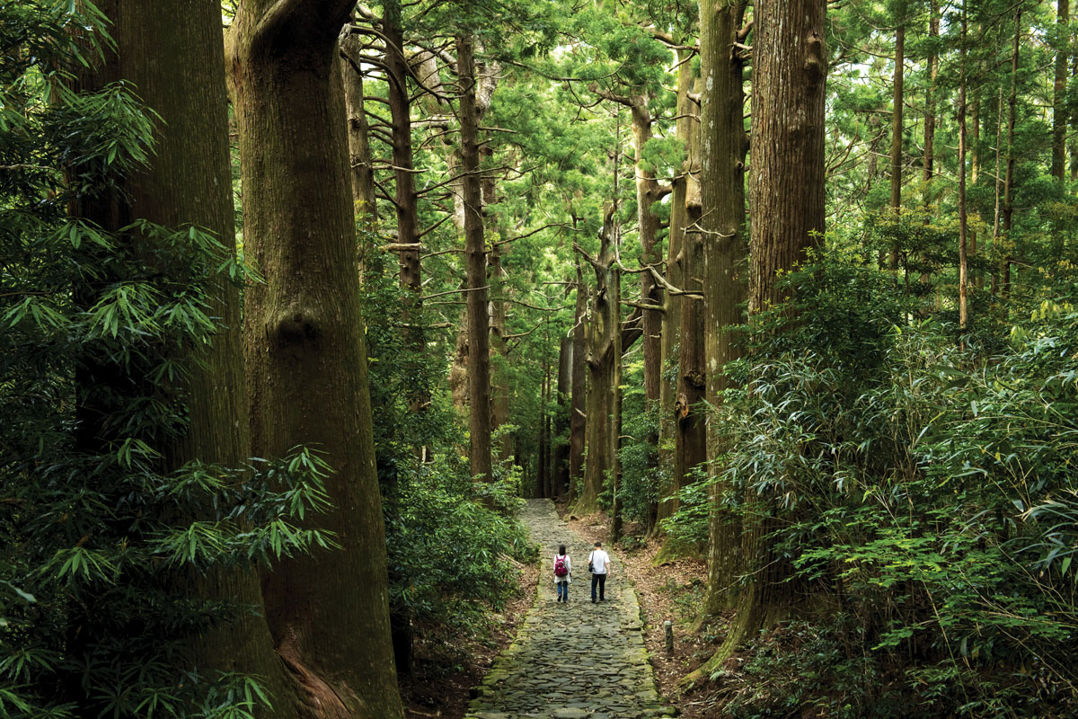 Forest bathing through the Kumano Kodo forest