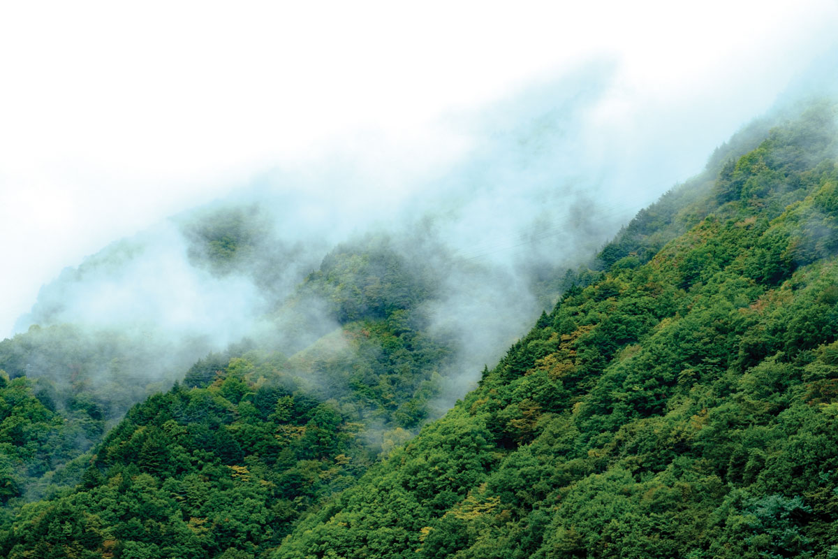 Forest Bathing through the forest of Nagawado Dam in Japan