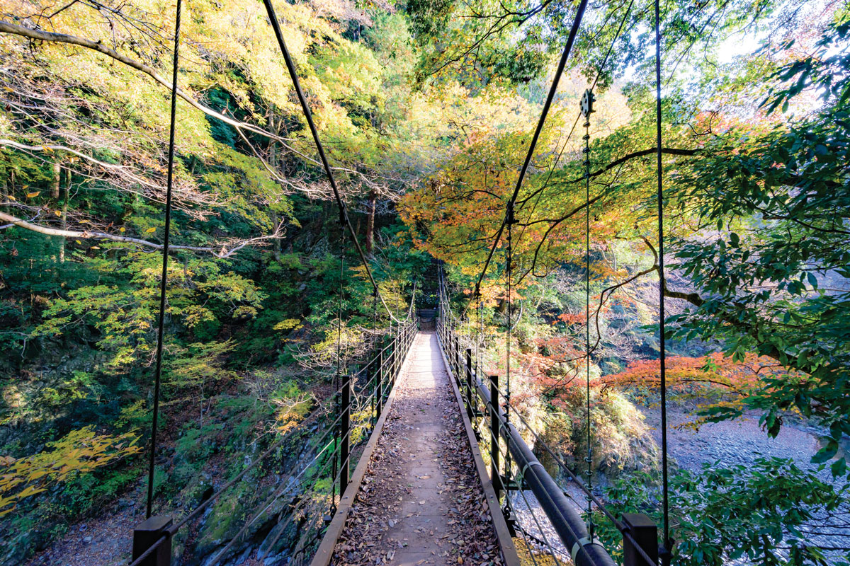 forest bathing at A suspended bridge into Okutama forest in western Tokyo