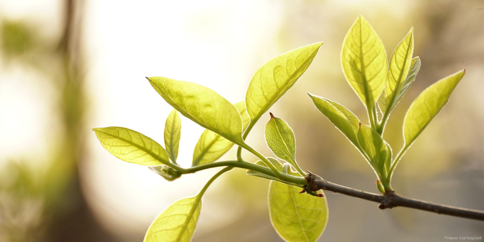 best-green-tea